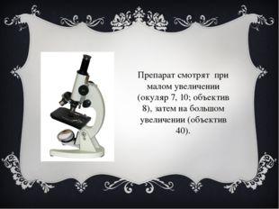 Препарат смотрят при малом увеличении (окуляр 7, 10; объектив 8), затем на бо