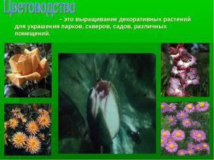 – это выращивание декоративных растений для украшения парков, скверов, садов