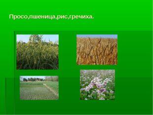 Просо,пшеница,рис,гречиха.