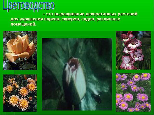 – это выращивание декоративных растений для украшения парков, скверов, садов...