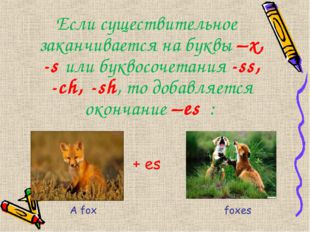 Если существительное заканчивается на буквы –x, -s или буквосочетания -ss, -c
