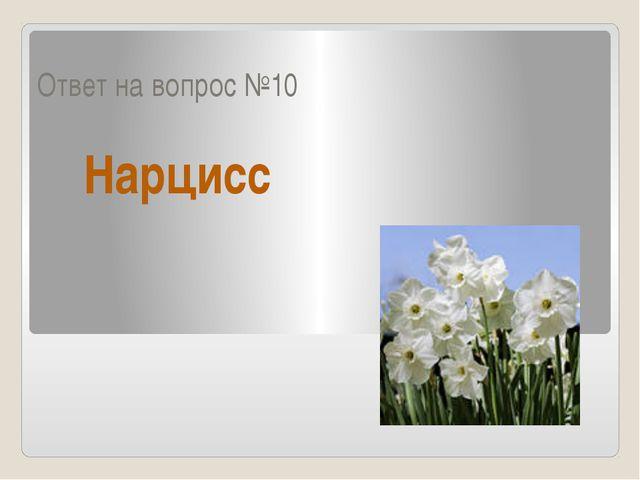 Ответ на вопрос №10 Нарцисс