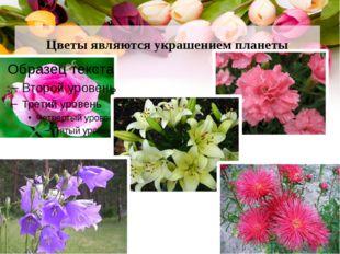 Цветы являются украшением планеты