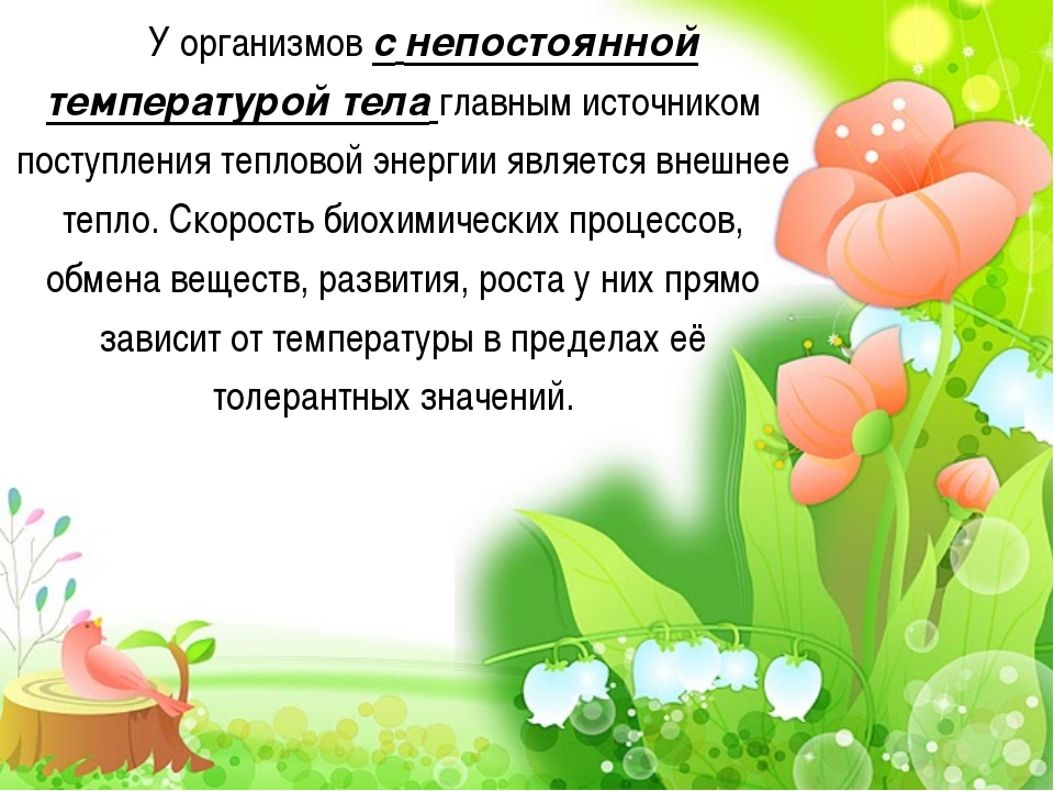 У организмов с непостоянной температурой тела главным источником поступления...