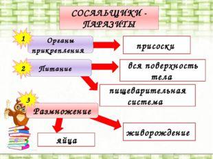 пищеварительная система СОСАЛЬЩИКИ - ПАРАЗИТЫ присоски яйца Органы прикреплен