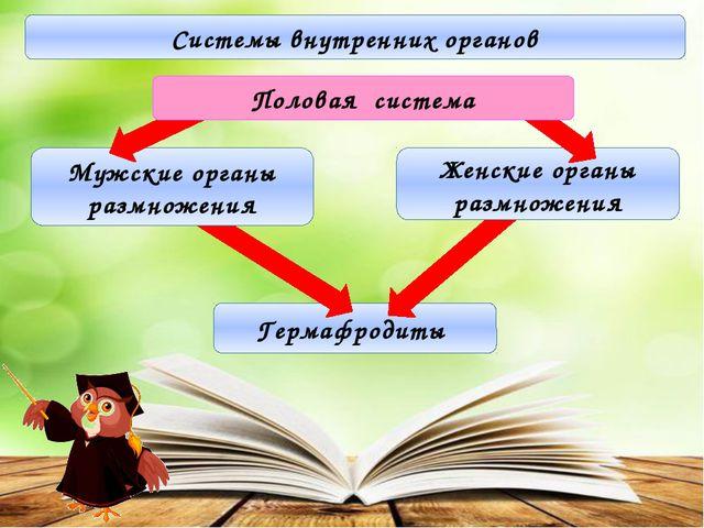Системы внутренних органов Гермафродиты Мужские органы размножения Женские о...