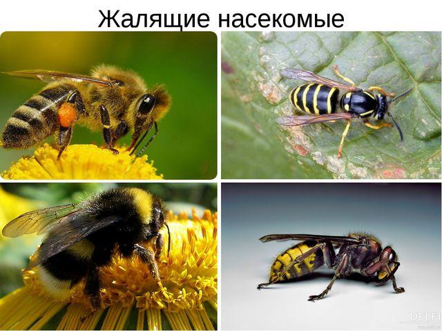Жалящие насекомые 00 mamont: