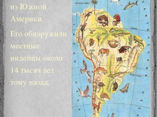 Картофель родом из Южной Америки. Его обнаружили местные индейцы около 14 тыс