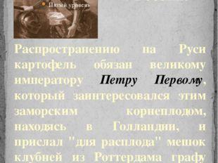 Распространению на Руси картофель обязан великому императору Петру Первому, к