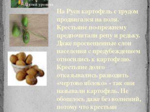 На Руси картофель с трудом продвигался на поля. Крестьяне по-прежнему предпоч