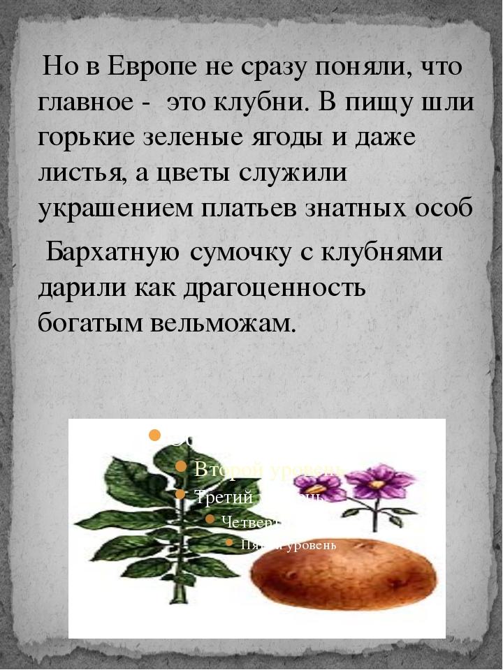 Но в Европе не сразу поняли, что главное - это клубни. В пищу шли горькие зе...