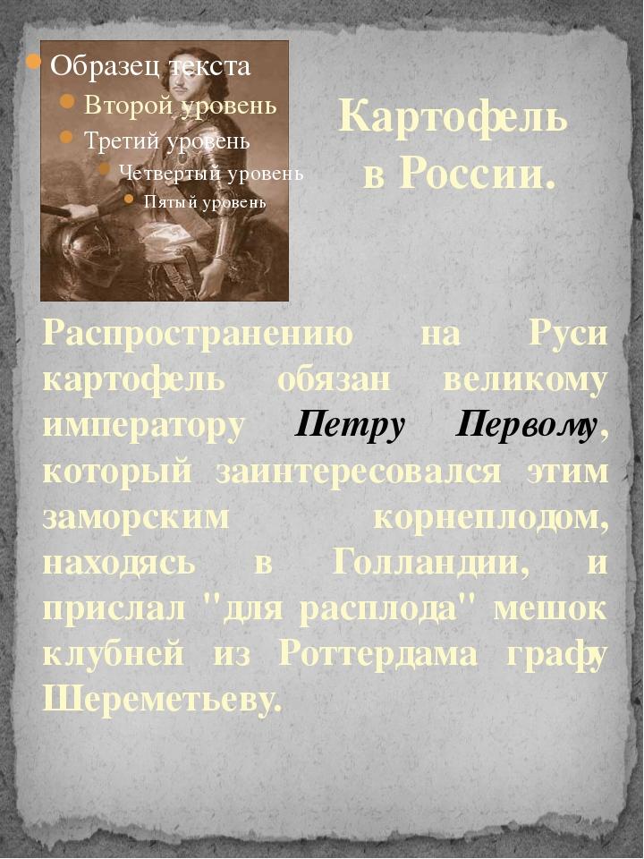 Распространению на Руси картофель обязан великому императору Петру Первому, к...