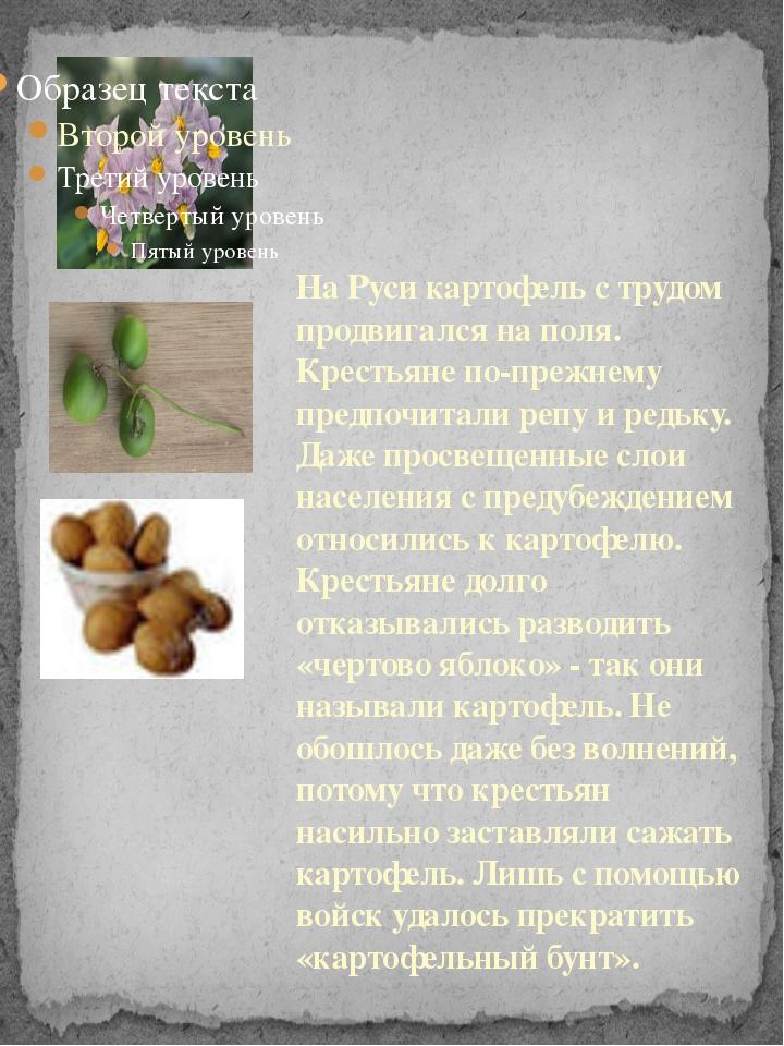 На Руси картофель с трудом продвигался на поля. Крестьяне по-прежнему предпоч...