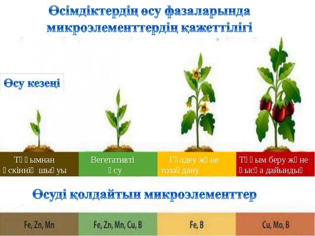 Тұқымнан өскіннің шығуы Вегетативті өсу Гүлдеу және тозаңдану Тұқым беру жән...