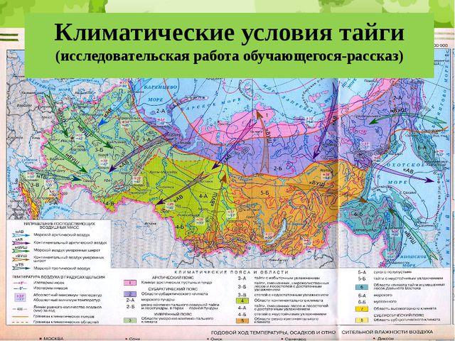 Климатические условия тайги (исследовательская работа обучающегося-рассказ)