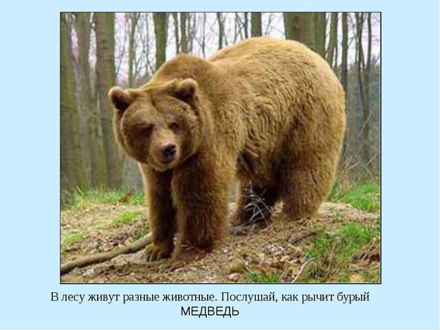 В лесу живут разные животные. Послушай, как рычит бурый МЕДВЕДЬ