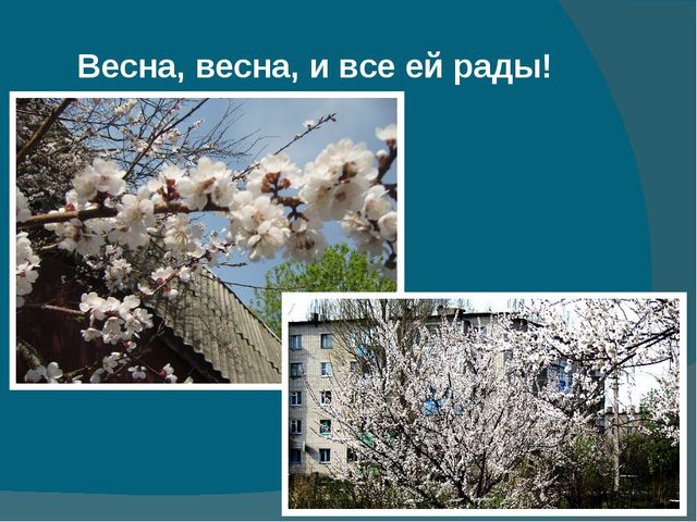 Весна, весна, и все ей рады!