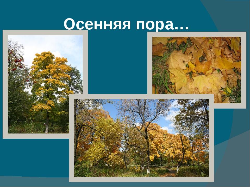 Осенняя пора…