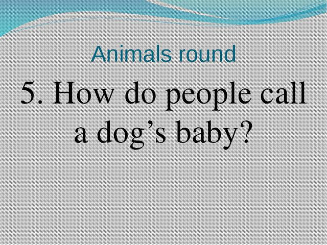 Animals round 5. How do people call a dog's baby?