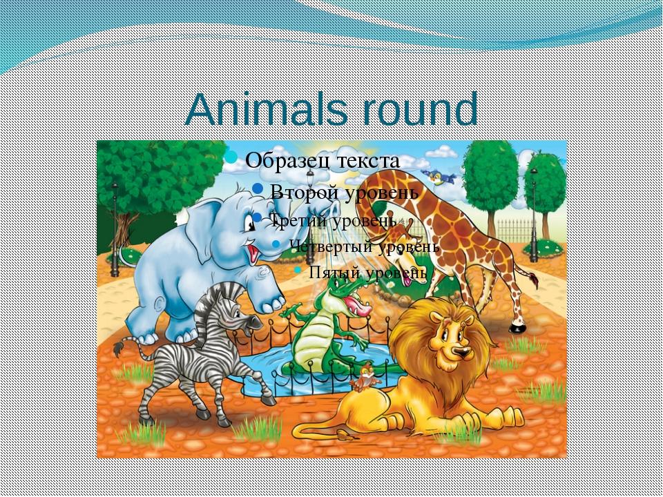 Animals round