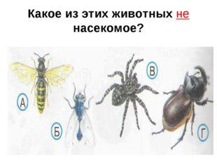 Какое из этих животных не насекомое?