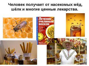 Человек получает от насекомых мёд, шёлк и многие ценные лекарства.