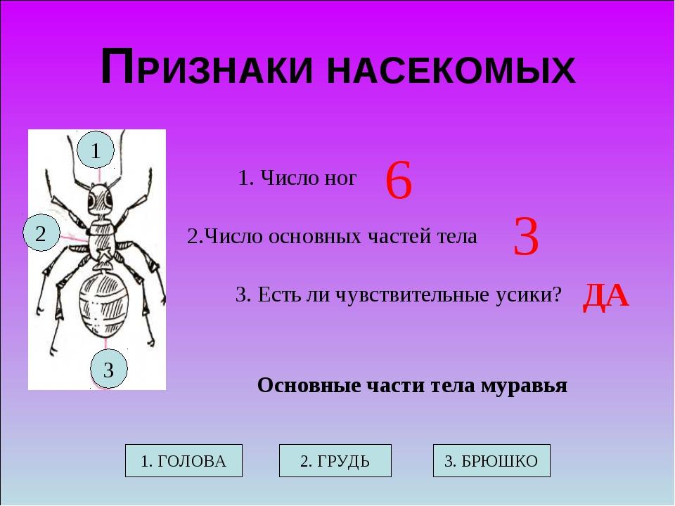 Схематический рисунок главного признака насекомых