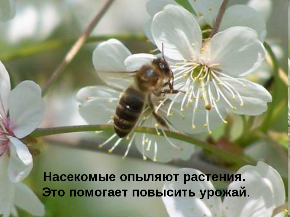 Насекомые опыляют растения. Это помогает повысить урожай.