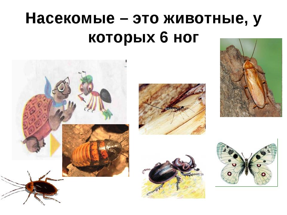 Насекомые – это животные, у которых 6 ног