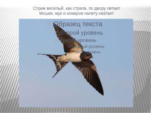 Стриж весёлый, как стрела, по двору летает. Мошек, мух и комаров налету хвата