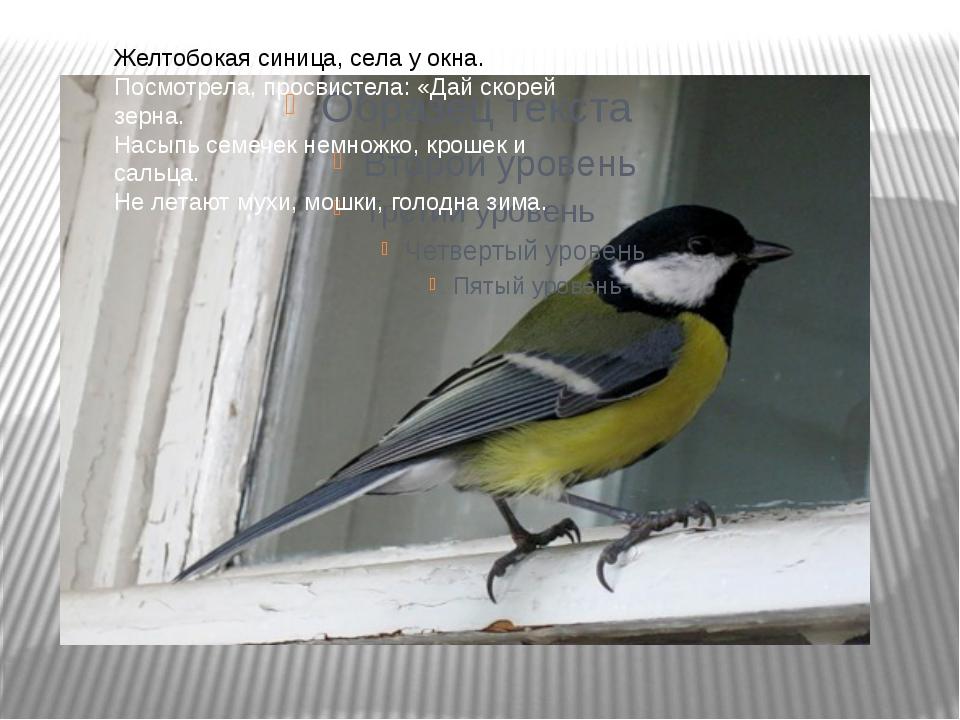 Желтобокая синица, села у окна. Посмотрела, просвистела: «Дай скорей зерна....
