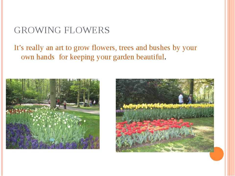GROWING FLOWERS It's really an art to grow flowers, trees and bushes by your...