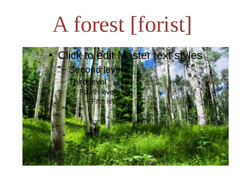 A forest [forist]