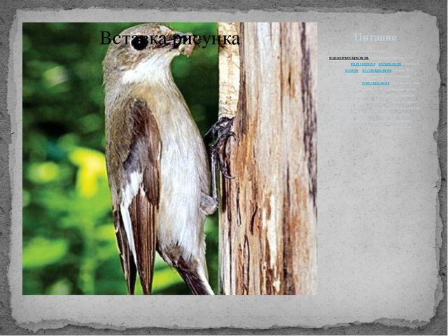Питание Мухоловка-пеструшка питается перепончатокрылыми (преимущественно личи...