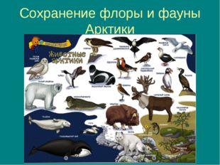 Сохранение флоры и фауны Арктики