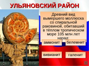 УЛЬЯНОВСКИЙ РАЙОН Древний вид вымершего моллюска со спиральной раковиной, оби