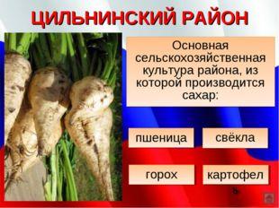 ЦИЛЬНИНСКИЙ РАЙОН Основная сельскохозяйственная культура района, из которой п