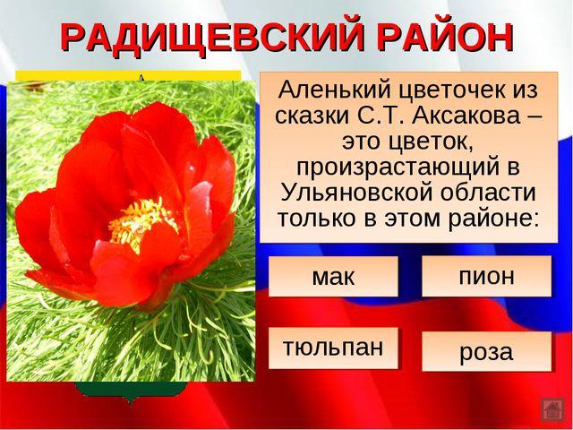 РАДИЩЕВСКИЙ РАЙОН Аленький цветочек из сказки С.Т. Аксакова – это цветок, про...