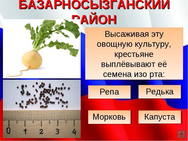 БАЗАРНОСЫЗГАНСКИЙ РАЙОН Высаживая эту овощную культуру, крестьяне выплёвывают...