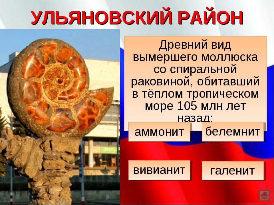 УЛЬЯНОВСКИЙ РАЙОН Древний вид вымершего моллюска со спиральной раковиной, оби...