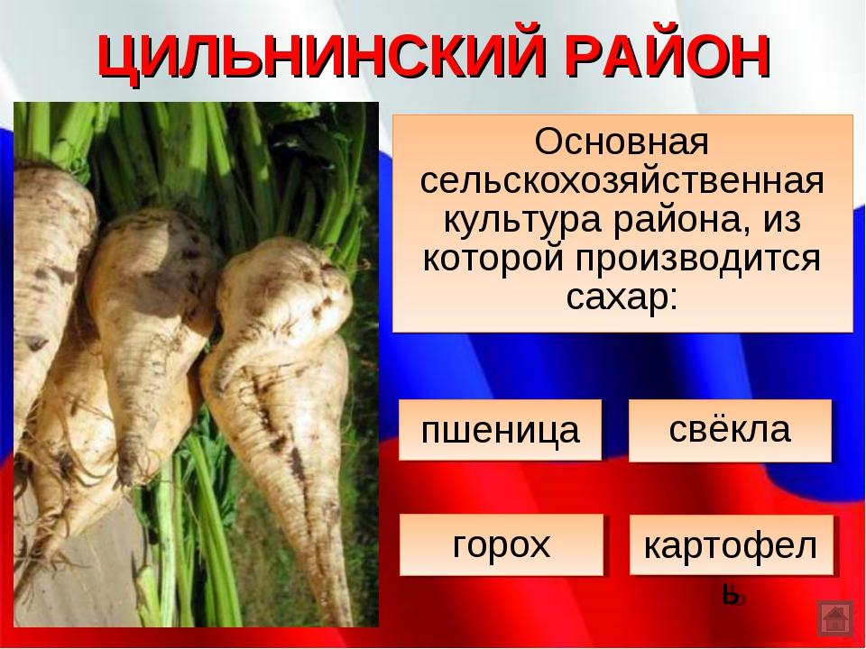 ЦИЛЬНИНСКИЙ РАЙОН Основная сельскохозяйственная культура района, из которой п...