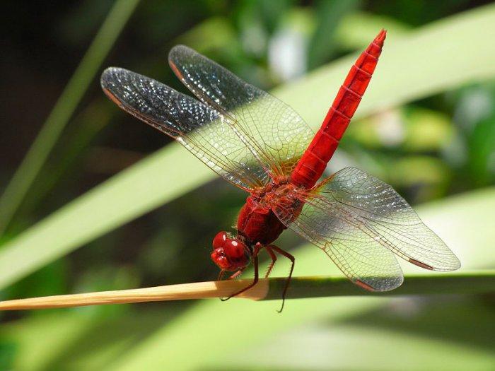 1278621995_800px-ricoh_caplio_r6_dragonfly_macro_r0010887.jpg
