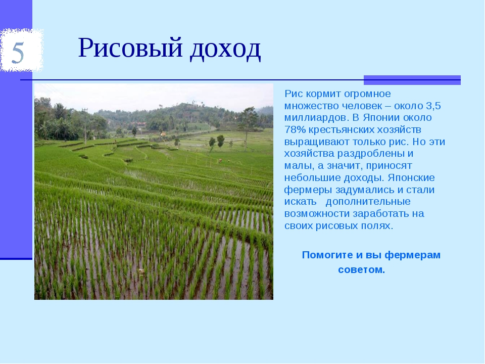 Рисовый доход Рис кормит огромное множество человек – около 3,5 миллиардов. В...
