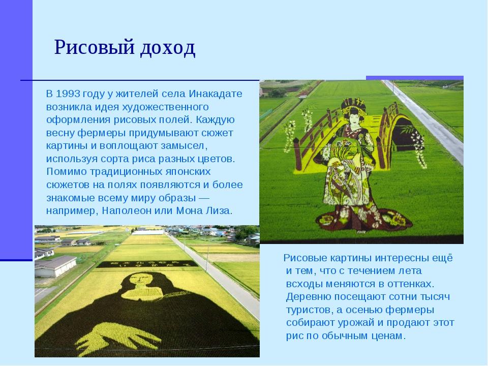 Рисовый доход Рисовые картины интересны ещё и тем, что с течением лета всходы...