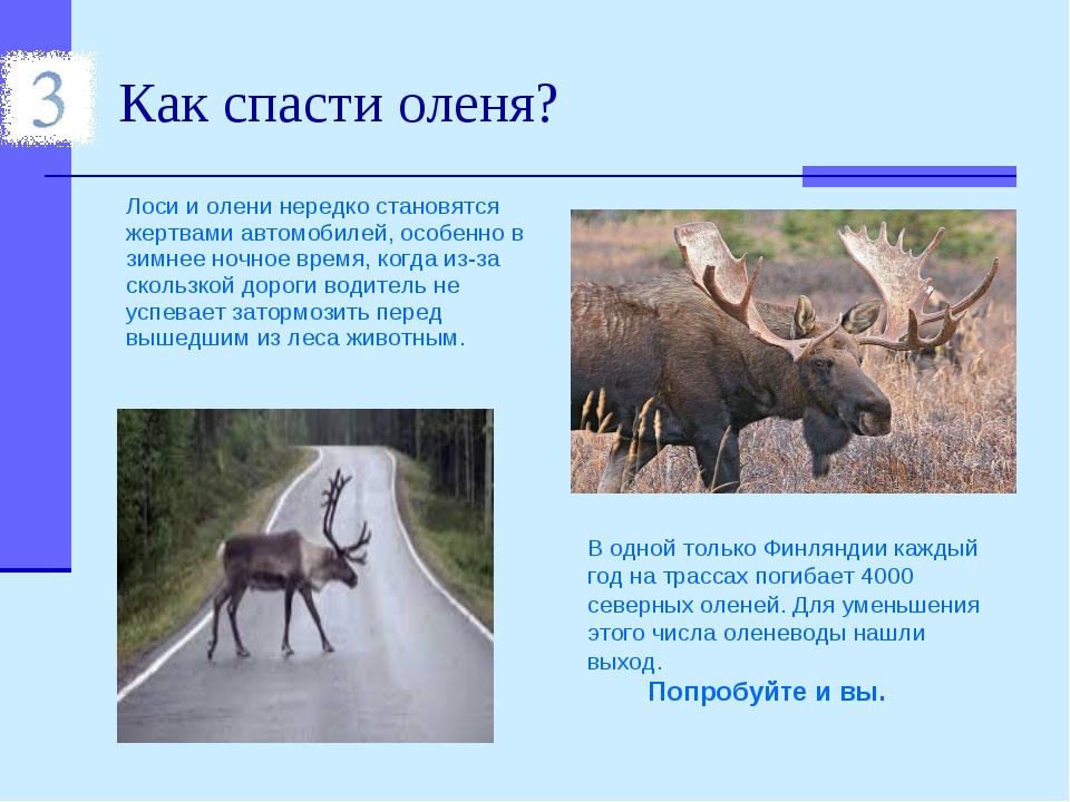 Как спасти оленя? Лоси и олени нередко становятся жертвами автомобилей, особе...