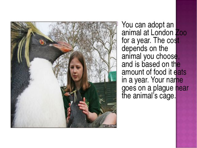 You can adopt an animal at London Zoo for a year. The cost depends on the ani...
