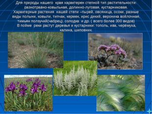 Для природы нашегокрая характерен степной тип растительности: разнотравно-к