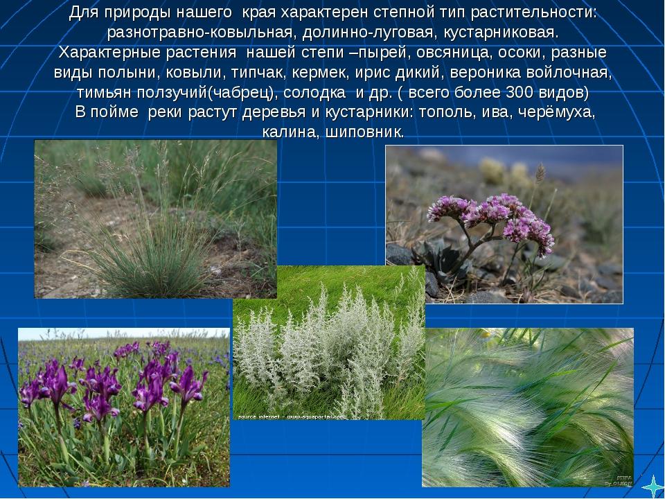Для природы нашегокрая характерен степной тип растительности: разнотравно-к...
