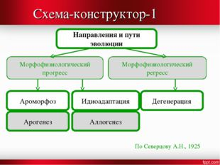 Схема-конструктор-1 Направления и пути эволюции Морфофизиологический прогресс