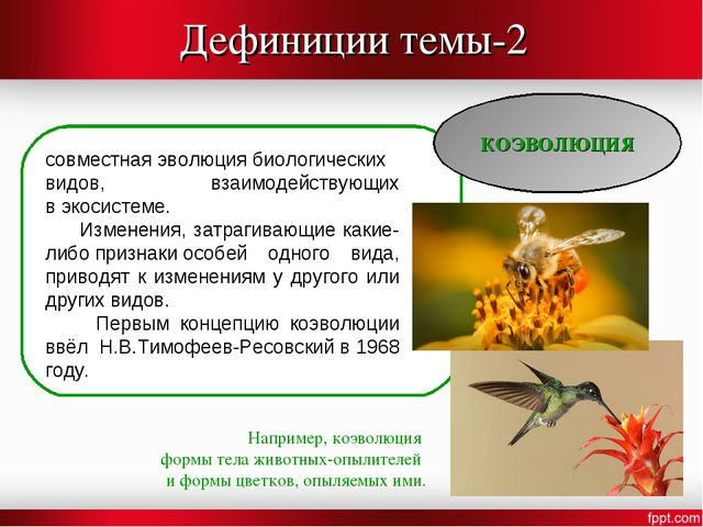 Дефиниции темы-2 КОЭВОЛЮЦИЯ совместнаяэволюциябиологических видов, взаимоде...